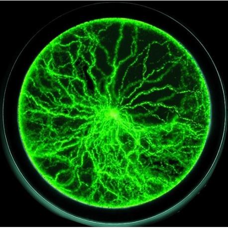 Plazma disk 15cm zelený